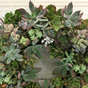 Assorted Succulent Wreaths